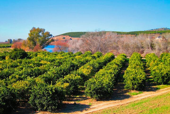 Asociación de productores y consumidores de productos ecológicos