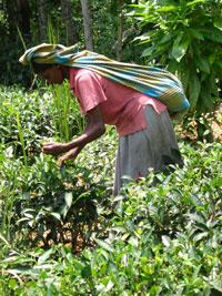 Small Organic Farmers' Association (SOFA)