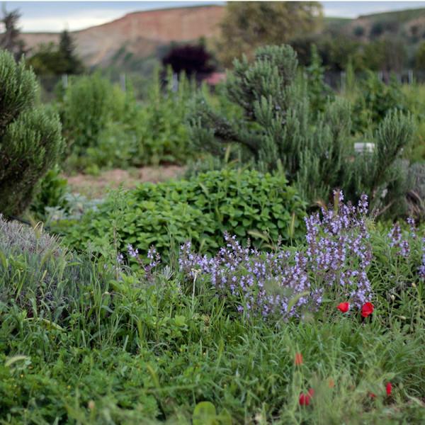 Plantas aromaticas ecologicas. / Hermisenda Huerta Natural