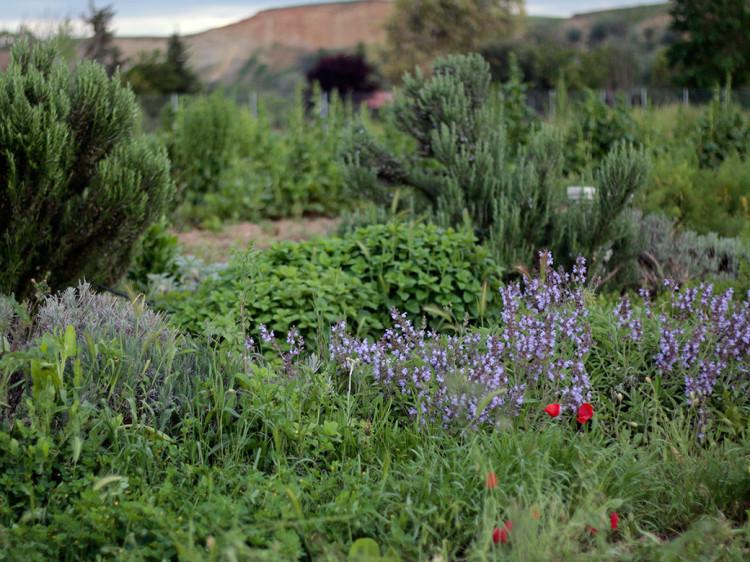 Plantas aromáticas ecologicas